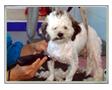 บริการดูแลสัตว์เลี้ยง,อาบน้ำ,ตัดขนสุนัข